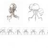 creature-espace-deplacement1