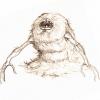 creatures-espace20